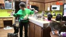 Buzz : Une femme partage sa maison avec 1.100 chats !