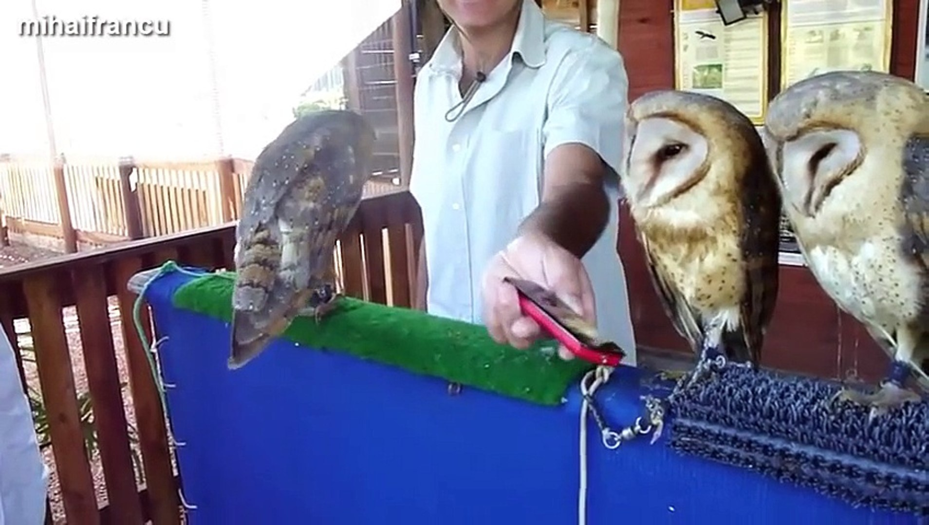 Funny & Cute Owl Videos Compilation