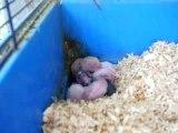 Los bebes conejitos