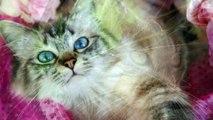 Nos amis les chats @Les créations d'Oli