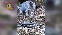 Cat vs Cobra Snake Attack Wild Animals Fight