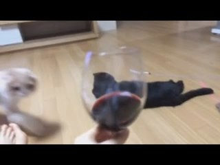 박가린님♥ 나 음주방송 한다!! (암유발주의)