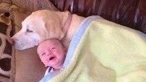 Los bebés lindos que juegan con los perros Labrador - Perros Amor bebés Compilación [HD