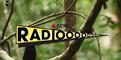 BIRDS OF PARADISE RADIOOOO