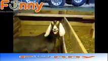 FUNNY Animals Talking _ Screaming Like Humans! Yelling Dogs Cats and Animal