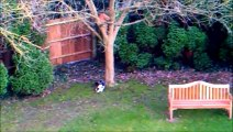 Watch Funny Cats Go Crazy Chasing Laser Pointer Beam up tree