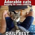 Les chats réclament des câlins et de l'amour.