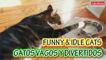 Funny cats compilation Amusing Gracious Droll Sleeping Idle cat COMPILACION Recopilación de VIDEOS de GATOS DIVERTIDOS VAGOS graciosos holgazanes dormilones gato vago dormilon dormido gracioso divertido holgazan VAGUE Idle cat SLEEPY sleep sleeping