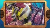Wild Animal Baby Explorers | Gone Fishing + Spring Has Sprung | S2E11