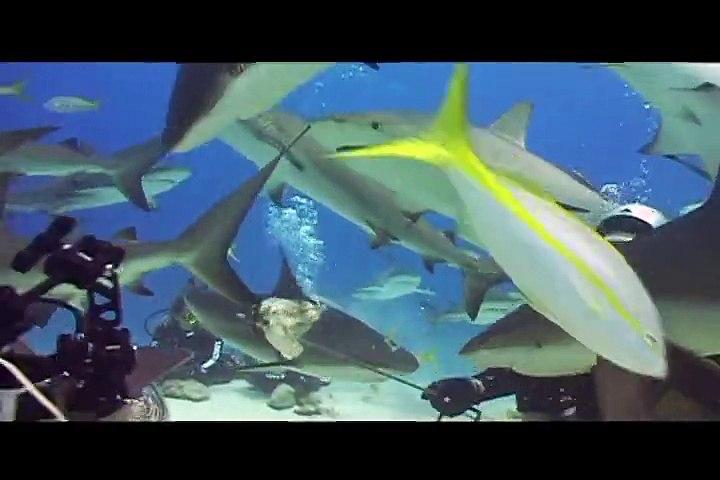 Casca Grossa viaja para as Bahamas para mergulhar com tubarões 02/02