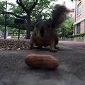 CUTE Squirrel Steals My Peanut