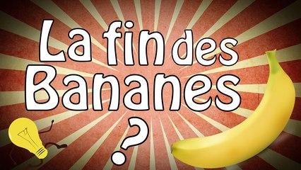 La fin des bananes ?
