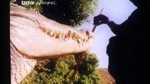 Unbelievable Crocodiles Exist In Nile River - BBC Animals Documentary