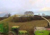 How the Irish Harvest Maize