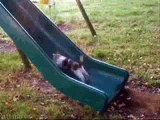 cat fails - 1 hour of funny cat & cute kittens fail videos - funny kitty cat video april 2015