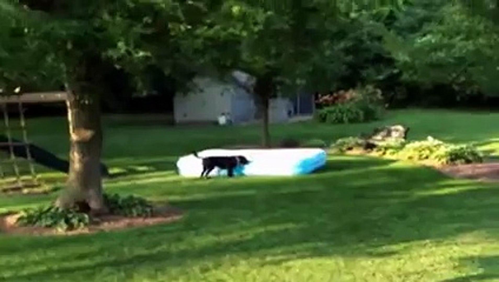 Amazing dog playing with kids