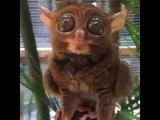 Ecco a Voi l'animale più tenero e dolce del mondo che vi conquisterà con lo sguardo