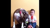 Toddler and pit bull throw peanut butter party