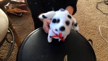 CUTE PUPPY DOG!!! FUN little cute puppy!! Barking and Walking for kids!!!