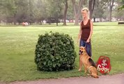 JFL Hidden Camera Pranks & Gags  Ultimate Dog Joke