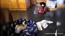 Les chats volent le panier des chiens