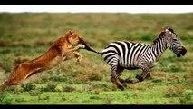 Documentary Animals Animals Documentary National Geographic Wild Animals Documentary