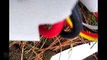 Parkour Fails   Best Parkour/Freerun Fail Compilation 2015   FailLand