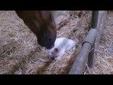 Il Gatto Che Si Fa Coccolare Dal Cavallo