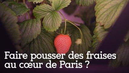 Faire pousser des fraises au cœur de Paris ?