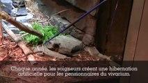 L'hibernation des animaux au Parc Zoologique de Paris