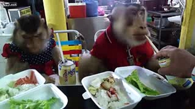 Liveleak   Lanch time - two serious monkeys eat in cafe (funny video)