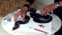 L'impressionnant talent de cet artiste qui peint un serpent en 3D va vous éblouir