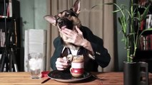 Funny dog videos 2016 - Funny dog compilation try not to laugh - Funny Animals