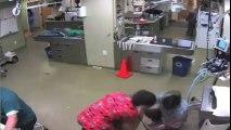 Veteriner Fobisi Olan Köpek Kendisini Tutmaya Çalışan Kadın Üzerindeyken Kaçtı