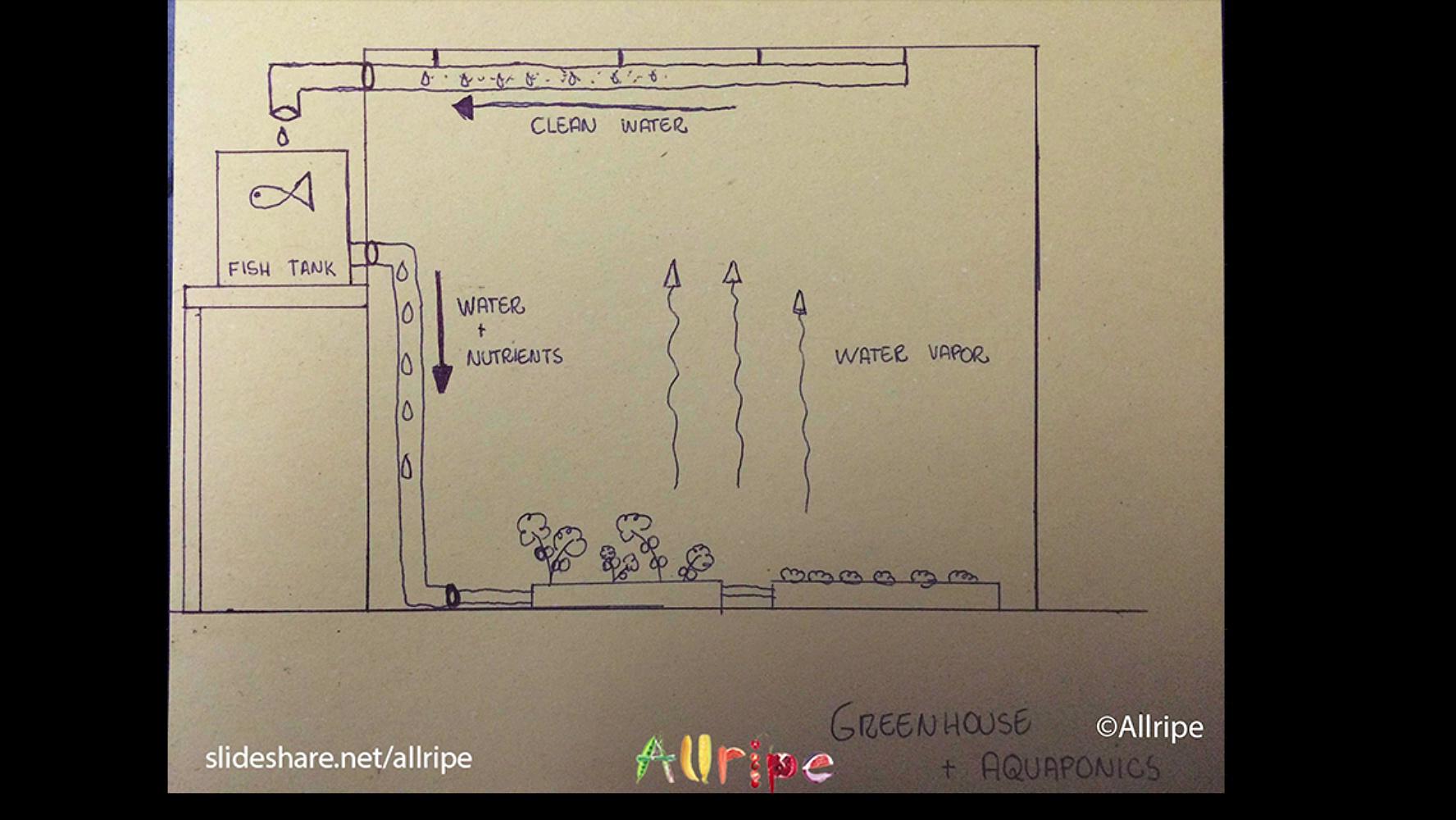 How can the aquaponics greenhouse work?