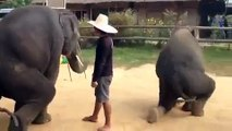 Animal fun | fun video | funny compilations | fun videos 2015 | try not to laugh |  best funny videos | Fun for animal