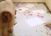 Polar Bear Paints With His Paws