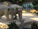 Elephants helps baby elephant at the zoo