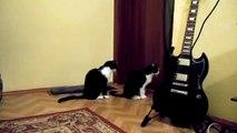 Кошка просит прощения - Ржу не могу