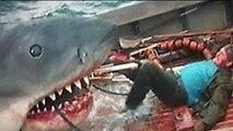Hombre es comido por tiburón  a la orilla de una playa