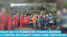 Plus de 15 pompiers pour libérer 2 chiens bloqués dans une crevasse ! À suivre maintenant dans la minute chien #115