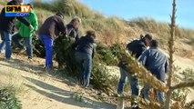 Sur l'ïle de Ré, des sapins de Noël pour consolider les dunes