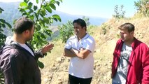 Aydın Nazilli Ceviz Fidanı Kestane Ağacı Kuruması