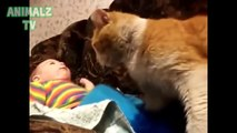 ( ̄ω ̄) - funny dogs 2015 - funniest pets hd videos for 2015 - funny dogs and cats in action