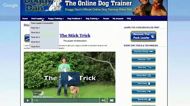 Dog Training Singapore – The Online Dog Trainer