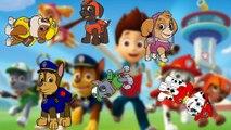 paw patrol cartoon theme song Finger Family Song youtube paw patrol cartoon theme song