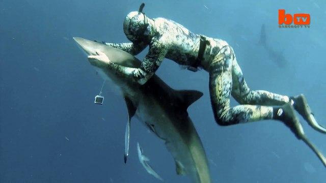 Cuddling a shark