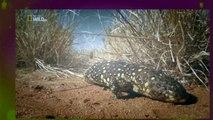 The Kangaroo King Documentary 2015 HD - National Geographic