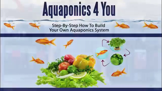How to build an aquaponics system? aquaponics 4 you system