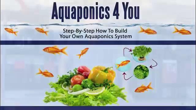 How to build an aquaponics system? aquaponics 4 you system